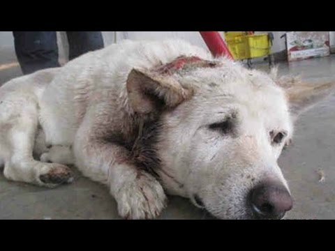 Mother Dog Saving Her Puppies | Dog rescued puppies from death