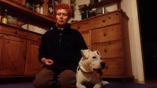 Staffy Tamy und das Spielzeug Dog Activity