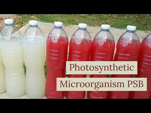 How to do photosynthetic microorganisms PSB ( liquit fertilizer)
