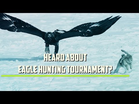 How Golden Eagles Hunt Rabbits in Kazakhstan!