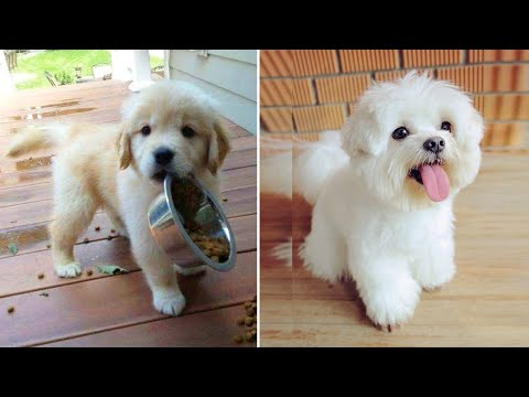 Cutest Puppies Doing Funny Things 2020 #4 | Cute Animals