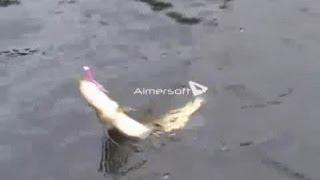 Ловля щук - как поймать щуку спиннингом осенью(, 2013-11-10T19:28:45.000Z)