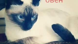 Какой породы кошки ты по гороскопу