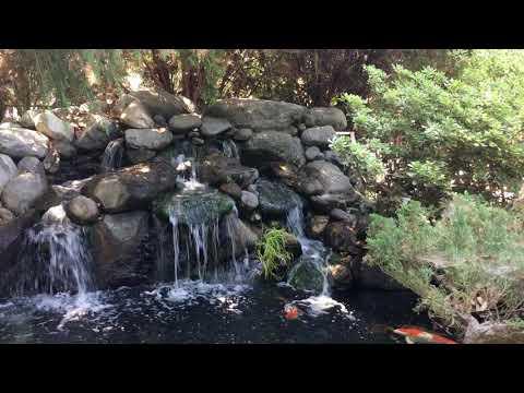 Mystic Koi U0026 Water Gardens