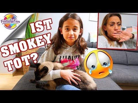 KATZE SMOKEY TOT oder ENTFÜHRT? - unsere Große Sorge - Family Fun