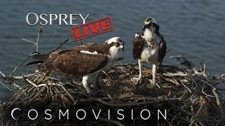 Preview of stream OspreyLIVE