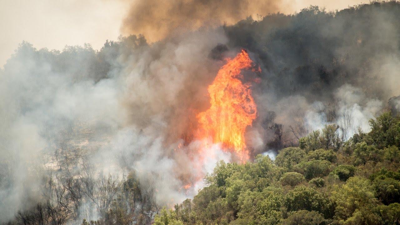 лесные стихийные бедствия яркий