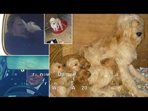Alleged Ess ex dog dealer c harged under Animal Welfare Act