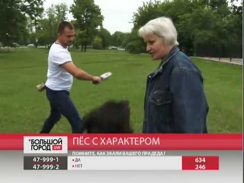 Пёс с характером. Большой город live 22/06/2018 GuberniaTV