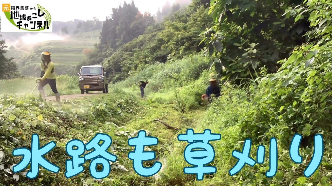 2020年7月13日ちゃめ仕事の田んぼ草刈り日記