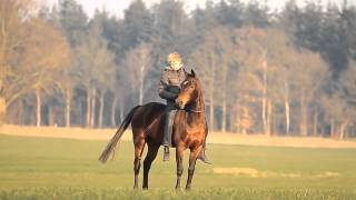 Любовь человека к лошади.