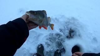 Рыбинка. Рыбалка на Рыбинском водохранилище 11.01.2019.