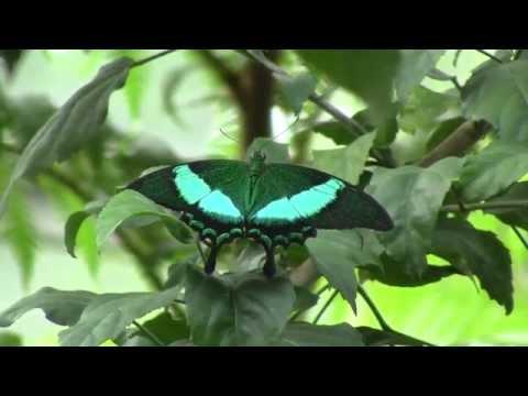 Wilhelma Stuttgart: Das Insektarium - Schmetterlingshaus