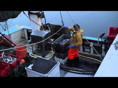 Landing Fish Ireland, Cé Helbhic, An Rinn