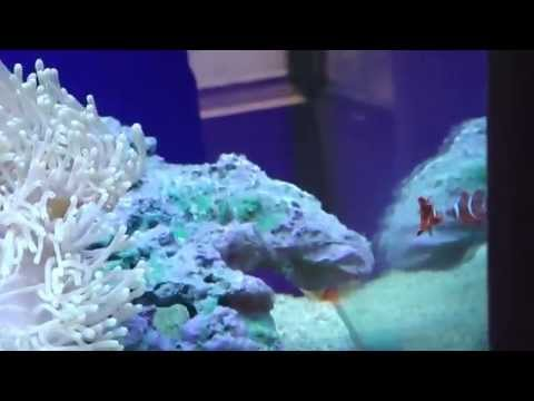 My 280L Marine Aquarium India Chennai