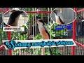 Cendet Pastol Sudah Mulai Gacor Cende Trotol Belajar Bunyi  Mp3 - Mp4 Download