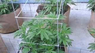 CLOSKUZH420 UPDATE ON MY MARIJUANA GROW OOP OUTDOOR WITH SUPER SOIL MIX