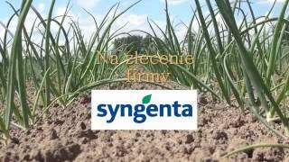 Zalecenia dotyczące stosowania herbicydów w cebuli Rijnsburger 5