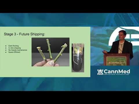 Cannabis Tissue Culture And Germplasm Storage