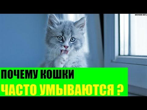 Вопрос: Почему кошка когда лижется, чуть прикусывает себя?