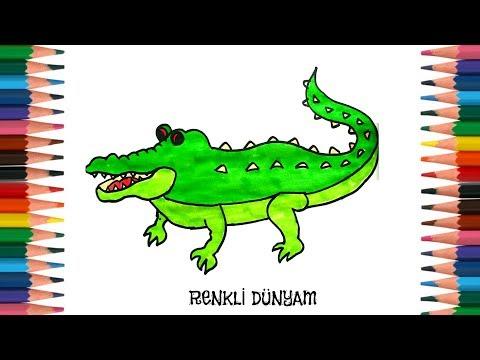 Timsah Nasil Cizilir Timsah Cizimi How To Draw A Crocodile
