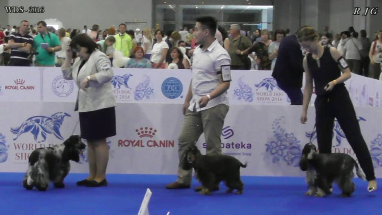 World Dog Show (Чемпионат мира собак) в 2018 году