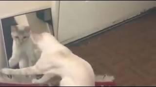 Kotek pierwszy raz widzi się w lustrze