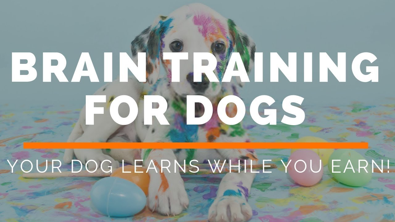 Amazon  Brain Training 4 Dogs Obedience Training Commands Coupon Codes June
