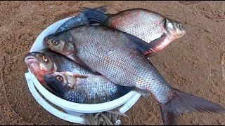 Рыбалка на большой Волге ПЕРВЫЙ ДЕНЬ ЛЕТА Клёв подлещика и плотвы