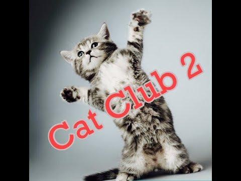 Cat Club 2 - Heidi, Cherry & Vaya - Children's Bedtime Story/Meditation