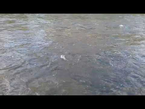 white sound river Elster