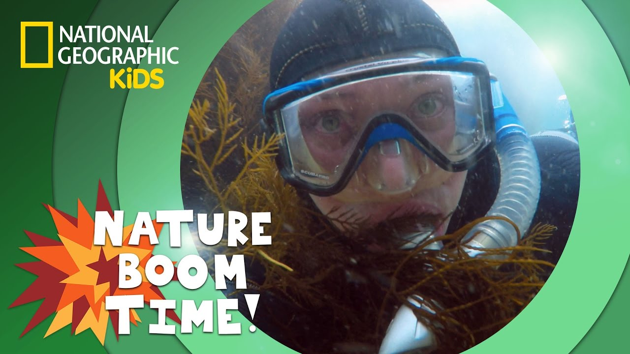 Kelp Forest | NATURE BOOM TIME