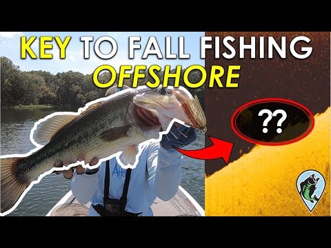How To Find Active Fall Bass Offshore | Fall Bass Fishing Tips