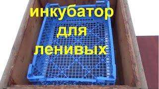 видео Инкубатор купить - по ценам производителя. От 2350 рублей.