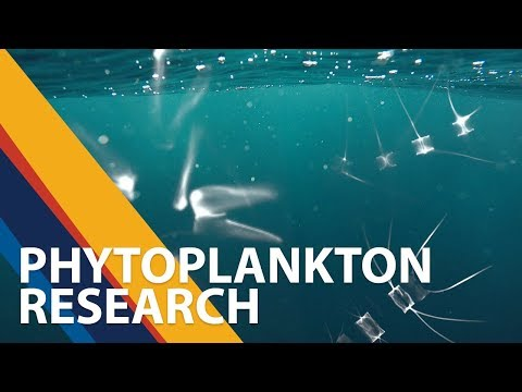 Small but mighty - studying marine phytoplankton