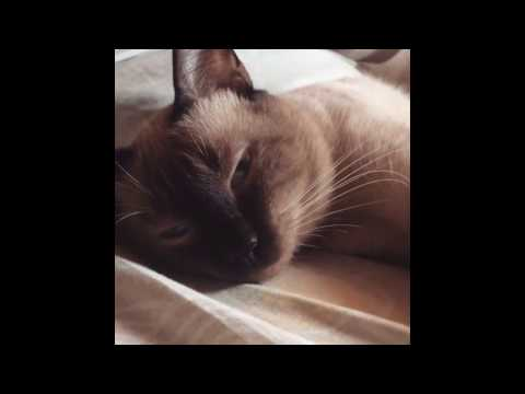 TOP 10 LAZIEST CATS OF ALL TIME COMPILATION