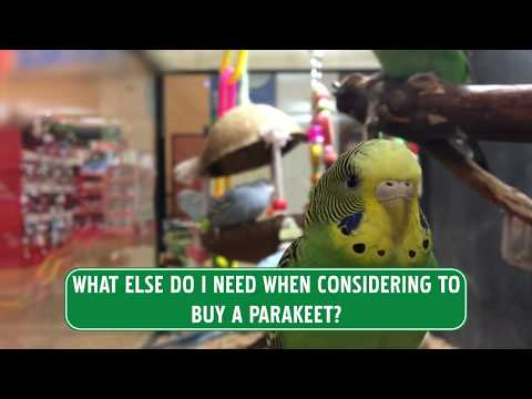 A Complete Guide On Parakeet Food T
