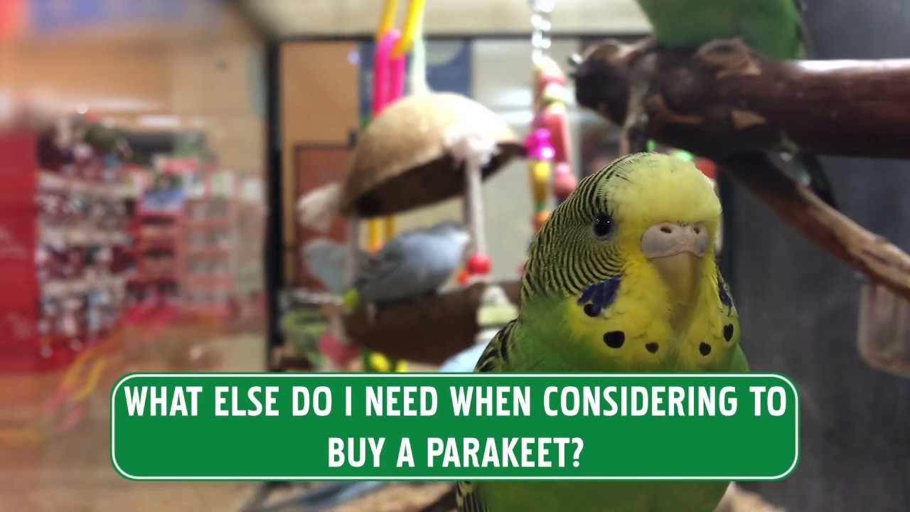 where is the  parakeets diet