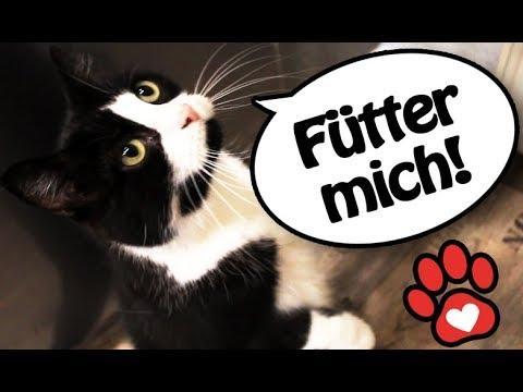 🐱Katzen MORGEN ROUTINE ♥ Prinz Pedro  ♥ Katzenhalter-Morgen