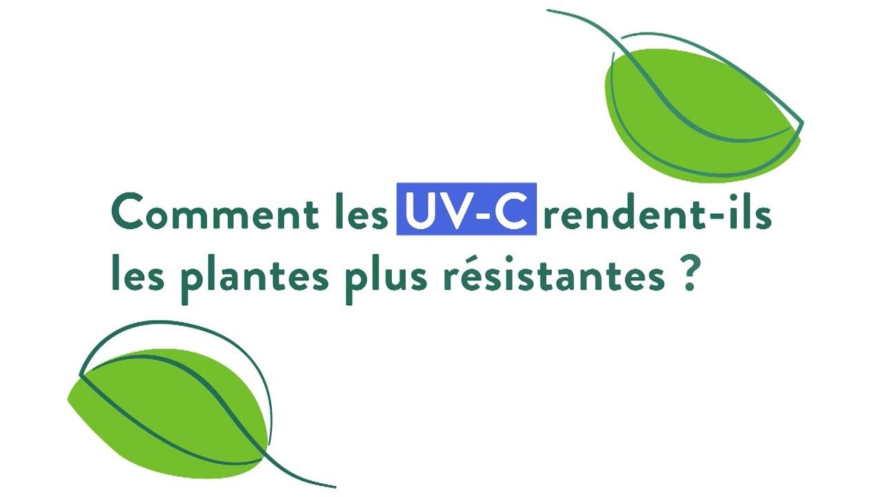 UV Boosting l La solution permettant de stimuler les défenses naturelles des plantes par flashs UV-C