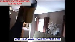 Bed Bug Rash Hillsborough Montgomery & North Branch NJ 732-640-5488 | Bed Bug Control New Jersey