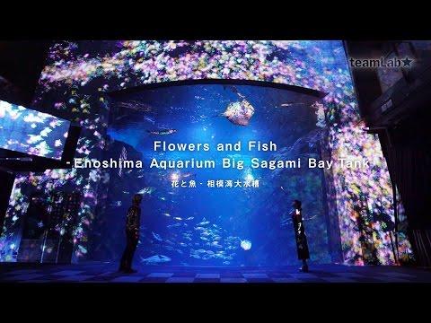 Flowers and Fish - Enoshima Aquarium Big Sagami Bay Tank / 花と魚 - 相模湾大水槽