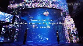 Flowers and Fish - Enoshima Aquarium Big Sagami Bay Tank / 花と魚 - 相模湾大水槽