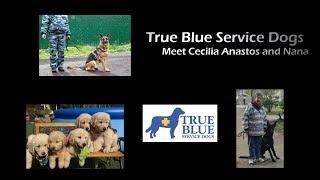 True Blue Service Dogs