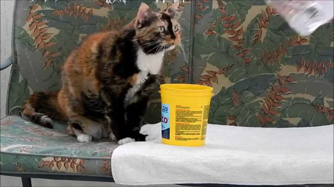 How to Make an Old Cat Drink Water! - YouTube