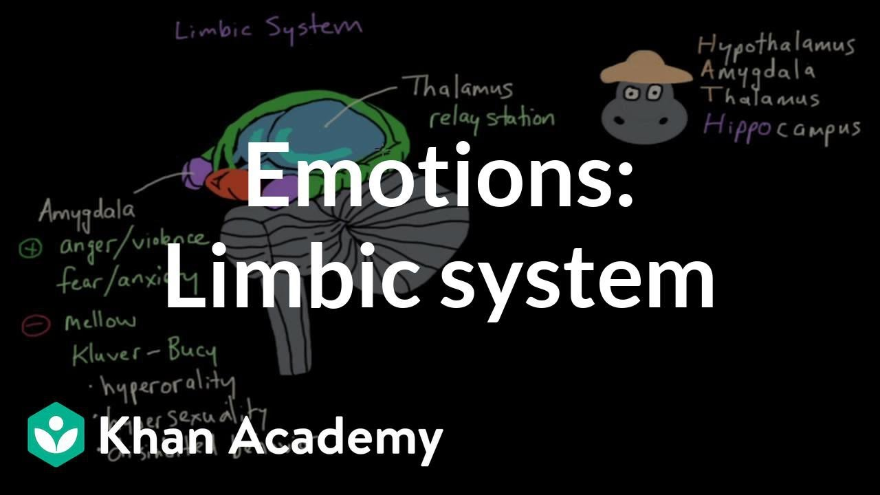 Limbic system: structure and function | Emotion (video
