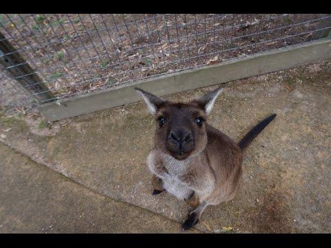 Ballarat Wildlife Park, Victoria