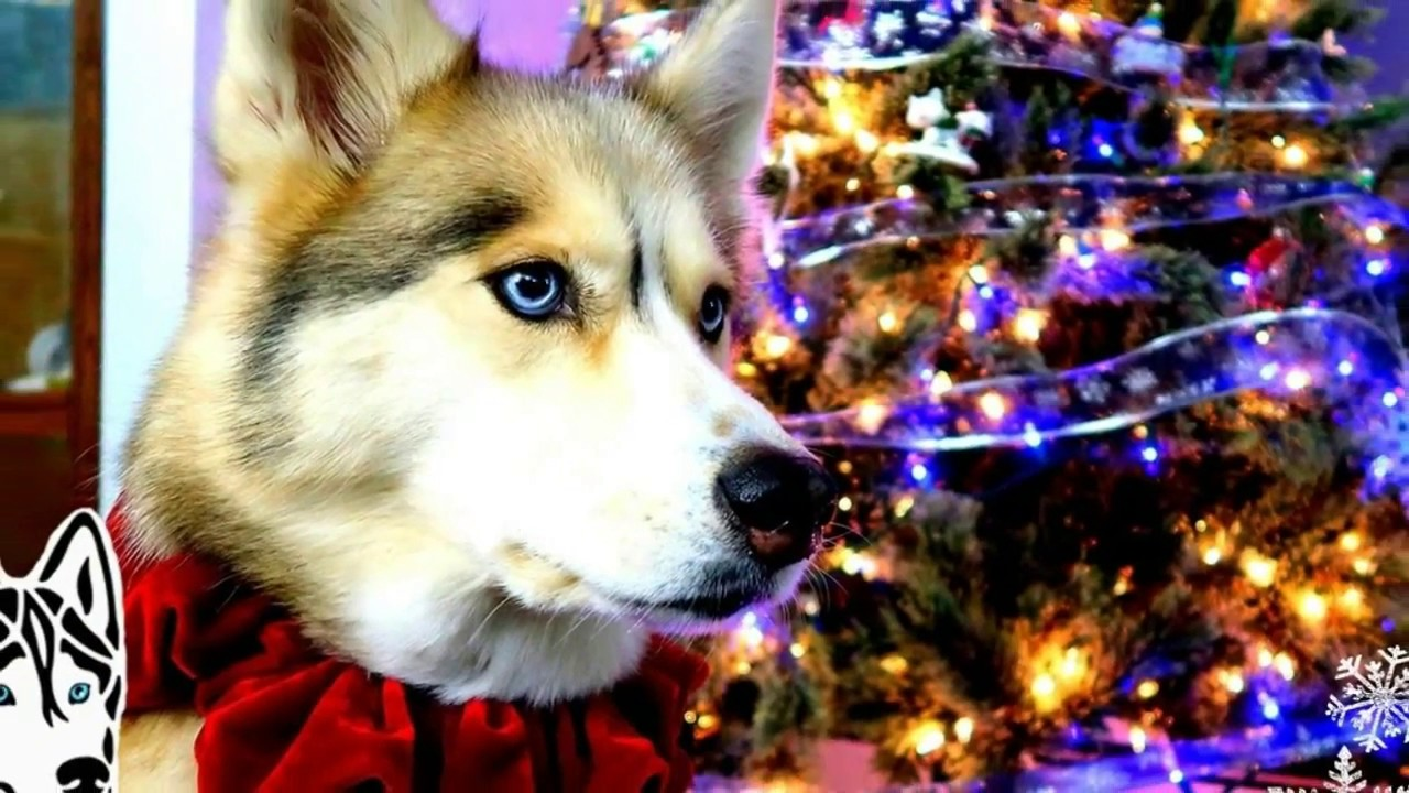 what do you think of this husky christmas tree - Husky Christmas Decoration