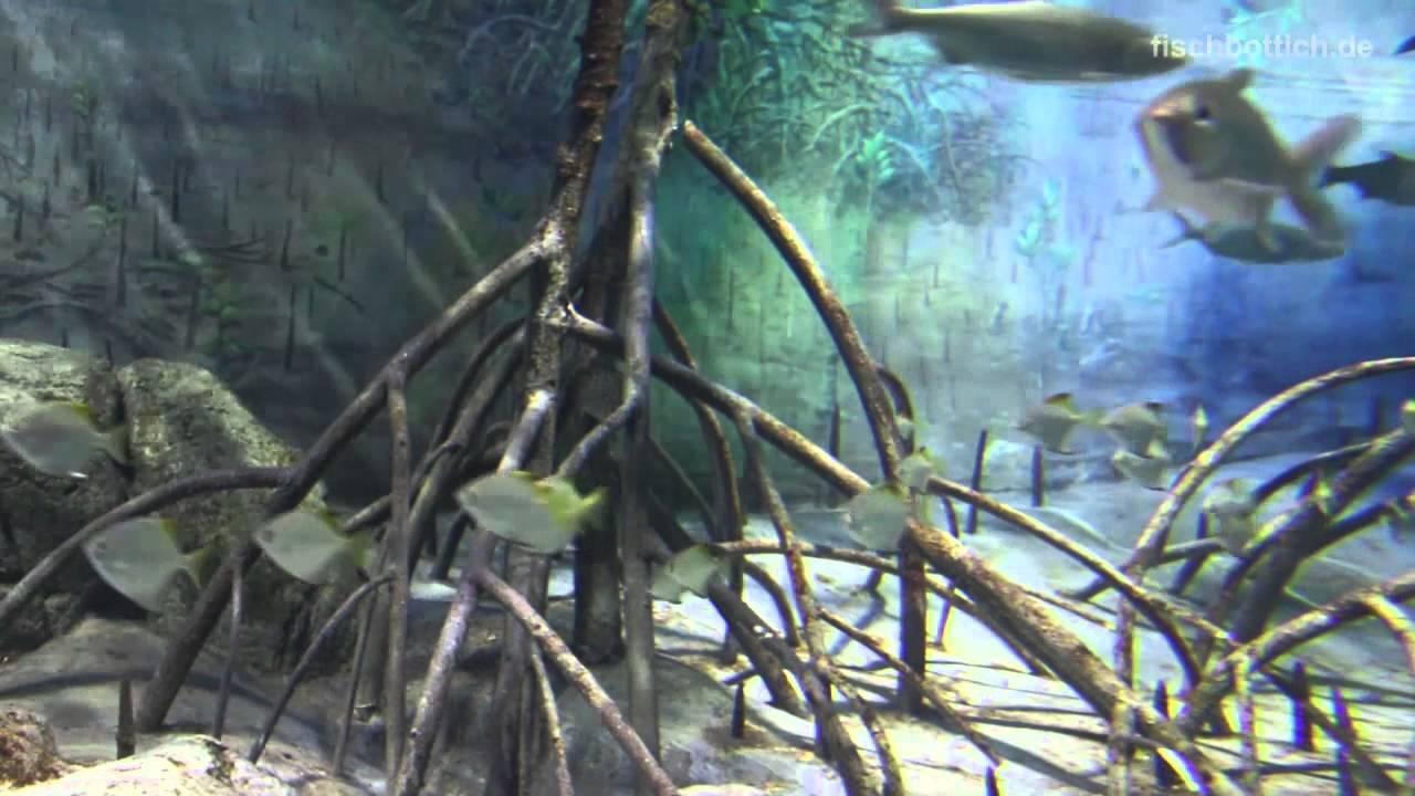 Hd Mangrove S E A Aquarium 16 17 Youtube