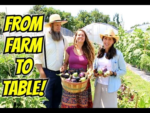 EGG PLANT~ FROM FARM TO TABLE and FUN FACTS
